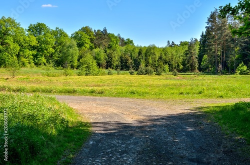 Beautiful spring landscape  Cross roads by a green clearing