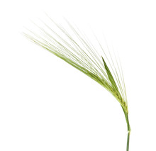 Green Spikelets Isolated On White Background