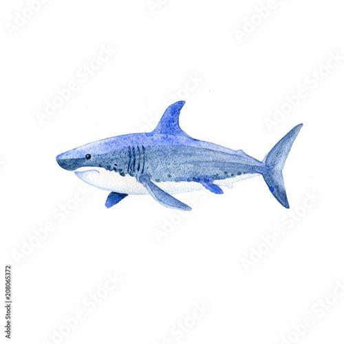 Fototapeta premium Raster akwarela rekina. Zwierzęta podwodny świat rastrowy.