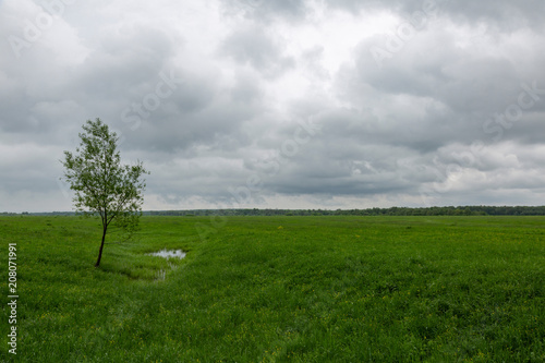 Deurstickers Weide, Moeras An uncultivated field with a green grass against a cloudy sky