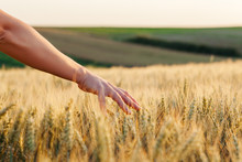 Woman's Through The Wheat In S...