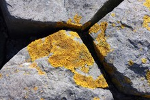 Yellow Lichen On Grey Basalt B...