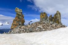 Chinstrap Penguins (Pygoscelis Antarcticus), Bright Lichen Covered Rocks, Half Moon Island, South Shetland Islands, Antarctica