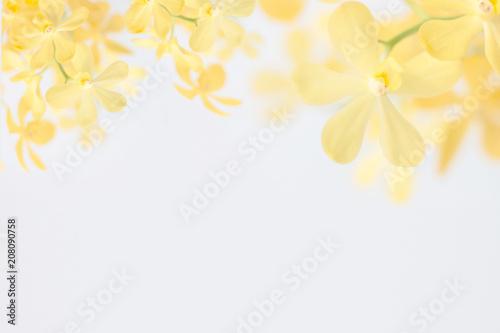 Fototapeta yellow orchid on white background obraz na płótnie