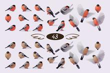 Vector Bullfinche Finch Bird F...