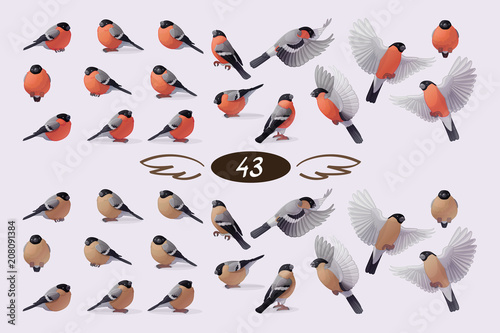 Photographie vector bullfinche finch bird family flock set