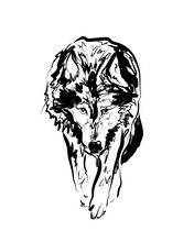 Vector Sketch Walking Wolf