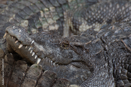 Fotobehang Krokodil closeup of a crocodile
