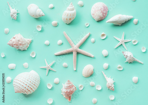 Top view of seashell set on color background.