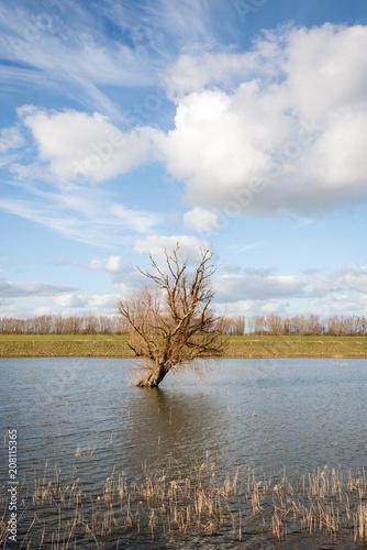Fotografie, Obraz  Bare tree skew standing in reflective water