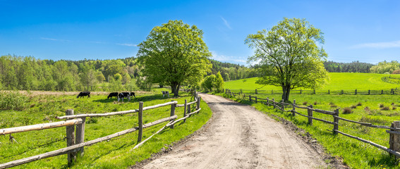 Countryside landscape, farm field and grass with grazing cows on pasture in rural scenery with country road, panoramic view