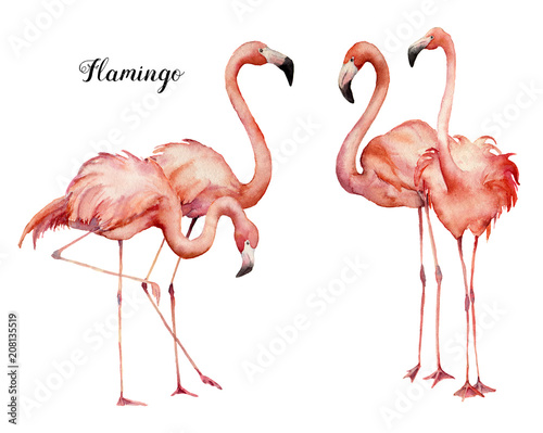 Garden Poster Flamingo Watercolor four pink flamingo group set. Hand painted bright exotic birds isolated on white background. Wild life illustration for design, print, fabric or background.