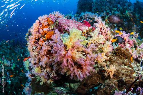 Fototapety, obrazy: Beautiful, colorful, healthy tropical coral reef