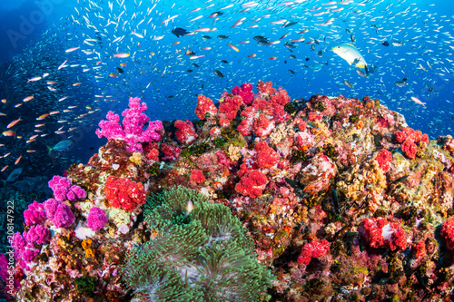 Staande foto Koraalriffen Tropical fish swimming around a healthy, colorful tropical coral reef