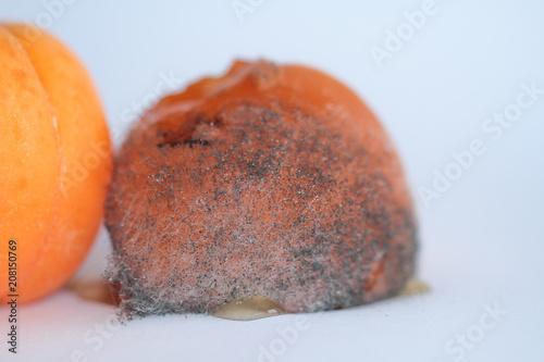 Abricots pourris, en décomposition
