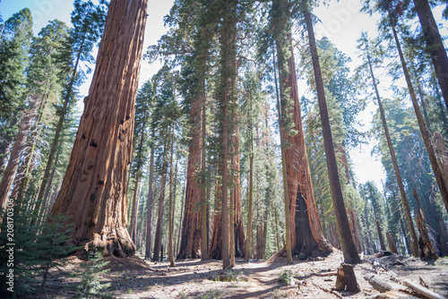 Tuinposter Natuur Park trail in sequoia national park in late May, 2018