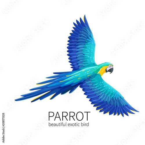 Vector parrot bird Fotomurales