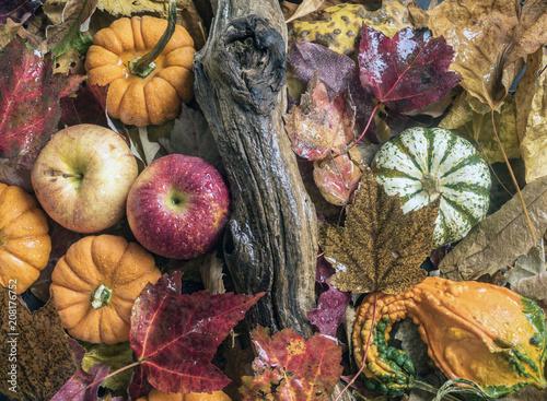 Fotografie, Obraz  autumn still life
