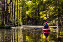 Kayaking Through The Trees