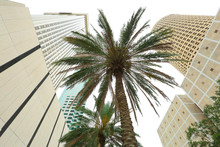 Palm Tree Downtown Tampa