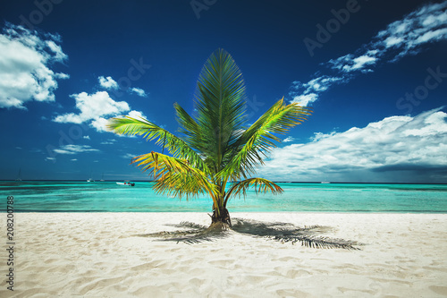 Palm tree and tropical island beach Canvas Print