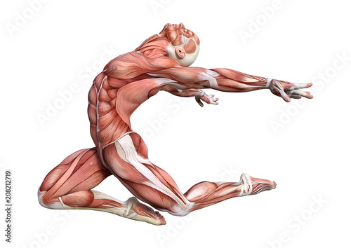 Papel de parede 3D Rendering Male Anatomy Figure on White