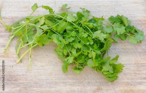 Koriander grüne Bund kochen gewürze sommerküche