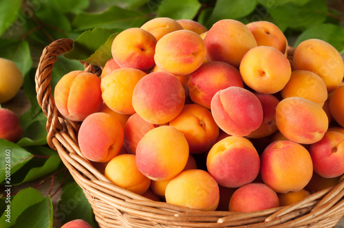 Many freshly picked ripe apricots with leaves in a basket on a wooden background Fototapeta