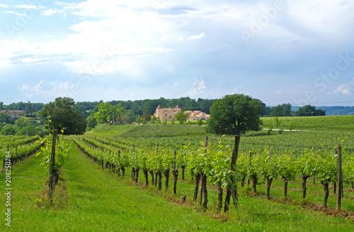 Fotografia  Weinbau im Bordelais