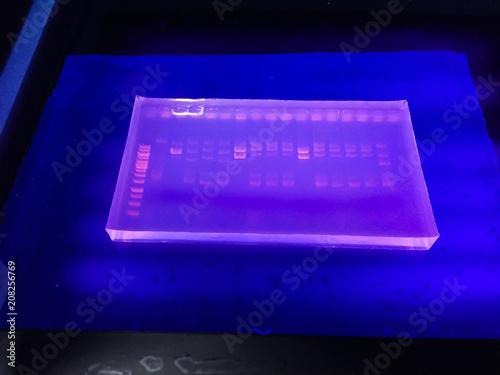 Fotografie, Tablou  Molecular technique Agarose gel elctrophoresis for DNA sample