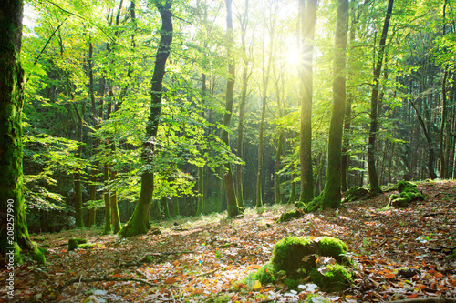 Keuken foto achterwand Bossen Summer forest with sun light.