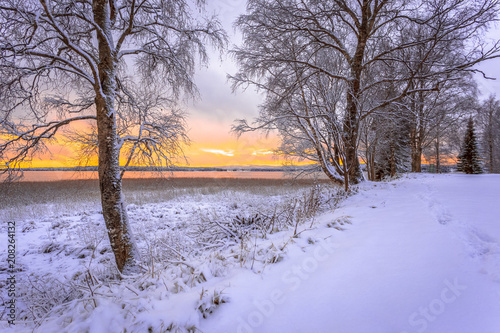 Tuinposter Purper First snow landscape from Sotkamo, Finland.