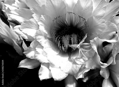 Fototapety, obrazy: cactus blossom