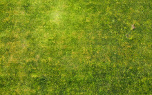 Grass Texture. Aerial Photo Of Green Lawn.