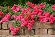 Natursteinmauer und blühender Rosenstrauch um eine Ziergartenanlage