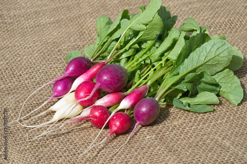 Multi-colored radish of several varieties on the burlap