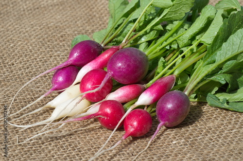 Radish four varieties on burlap close-up