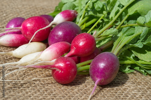 Multi-colored radish of several varieties on the burlap close-up