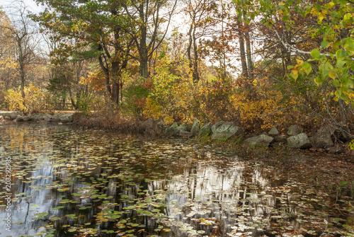 Fotografie, Obraz  Leaves changing on pond in Borderland