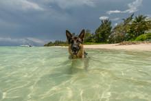 Shepherd  On The Mauritius Beach