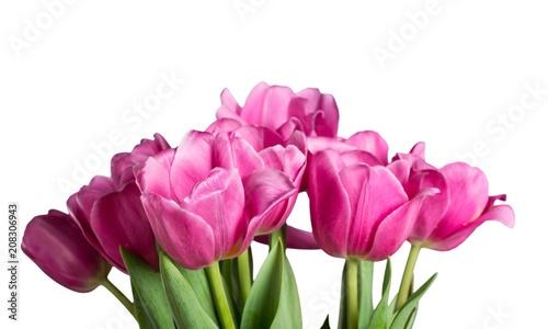 Staande foto Tulp Tulip.
