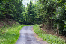 Asphalt Road In The Forest, Po...