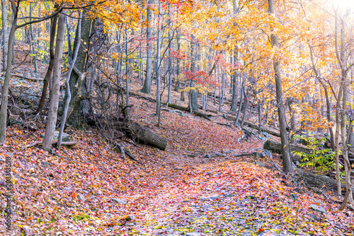 Cuadros en Lienzo Empty hiking trail through colorful red, orange foliage fall autumn forest with
