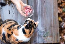 Calico Homeless Cat Curious Ex...