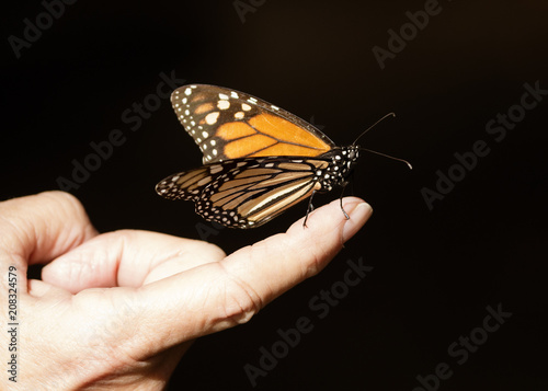 A butterfly perched on a person's finger.