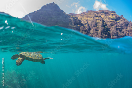 Poster Tortue Turtle swimming near the cliffs