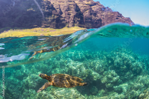Photo Turtle swimming near the cliffs