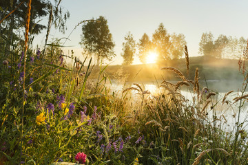 Wild flowers sunrise. / Beautiful morning sun and natural plants in north Poland