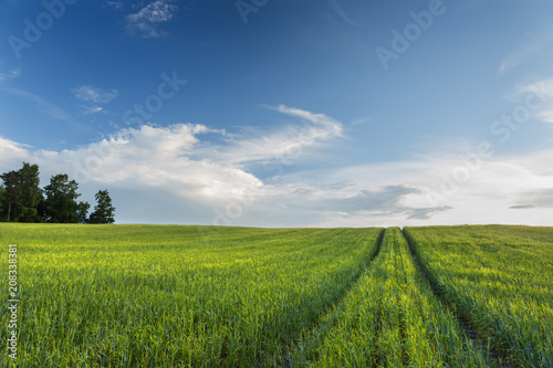 Fotobehang Platteland Dirt road in green field. / Countryside scenery with amazing landscape in north Poland