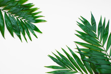 Palm Green Leaves Tropical Exo...